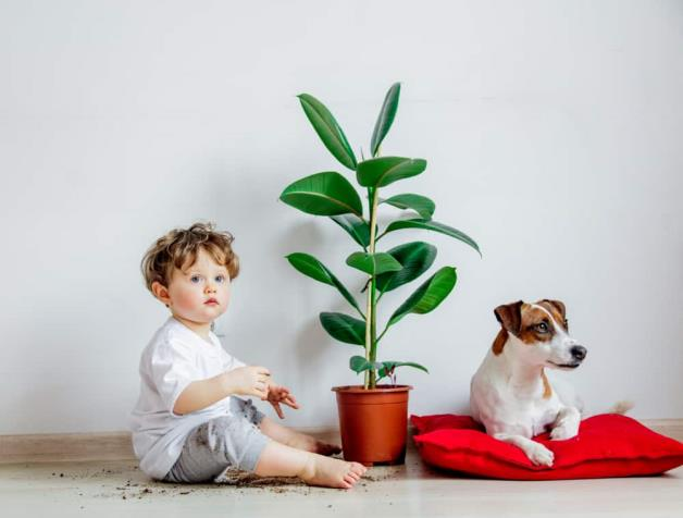 Children with anal itching: Causes and home remedies